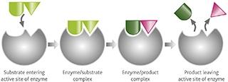 wine_enzymes_figure1_otherimage
