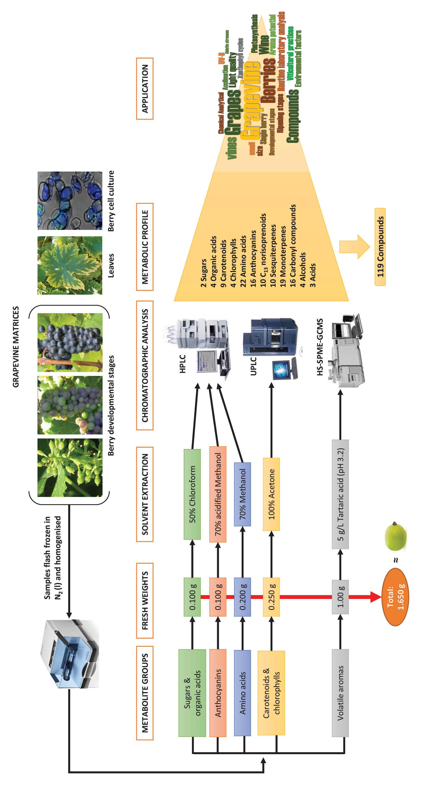 Analytical methods to measure grape metabolites (Figure 1)