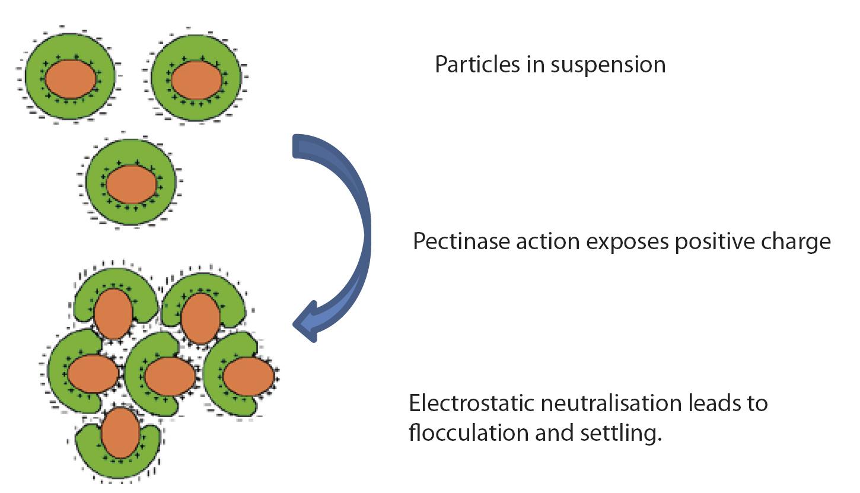 Flotation (Figure 1)