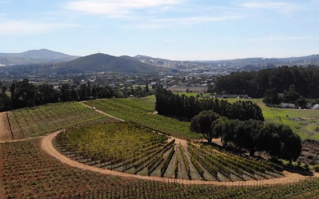 SU and Vinpro launch world-class platform for vineyard training & research