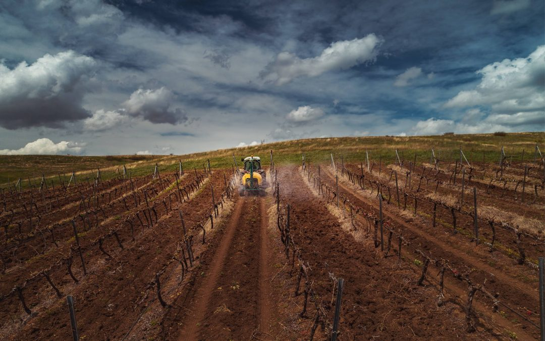 SA wine industry has less room to hide from climate change