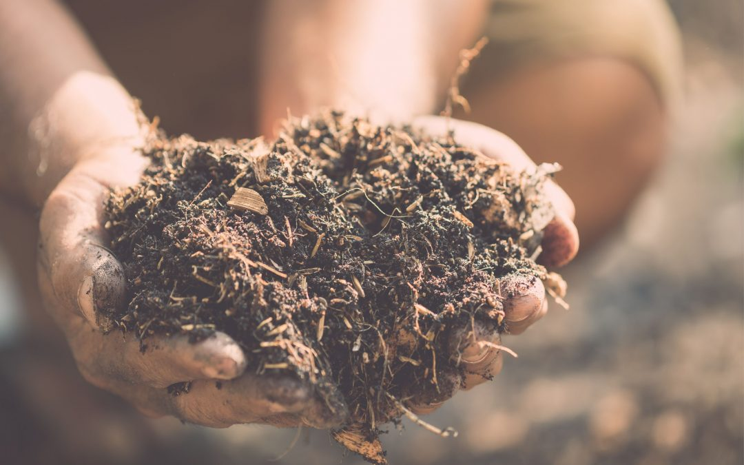 Healthy soils means healthy roots