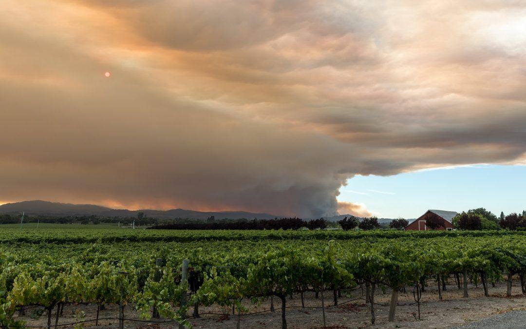 The smoke spoilage of wine