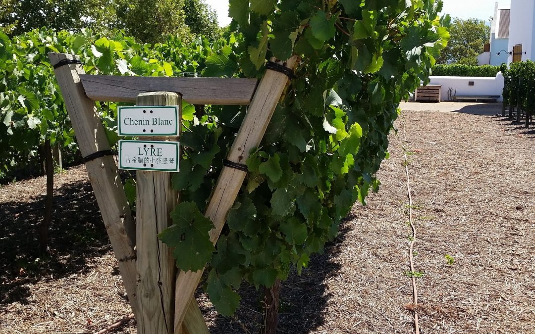 Trellis effects on wine composition (Part 2): Aroma